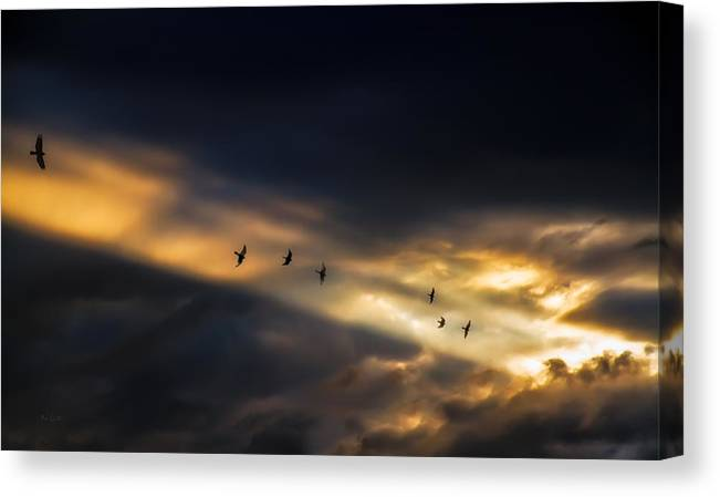 Birds Canvas Print featuring the photograph Seven Bird Vision by Bob Orsillo