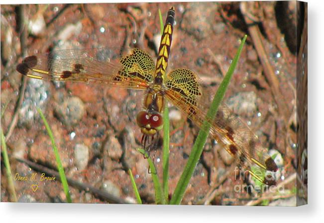 Dragonfly Canvas Print featuring the photograph Amanda's Pennant Dragonfly Female by Donna Brown