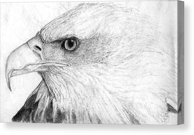 Pencil Drawing Canvas Print featuring the drawing Bald Eagle Profile by Lucien Van Oosten