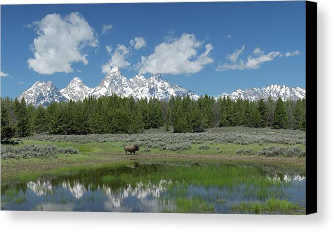 Tetons Canvas Print featuring the photograph Teton Reflection With Buffalo by George Sanquist