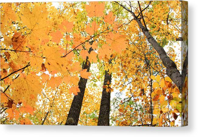Fall In Nh Canvas Print featuring the photograph Autumn Days by Michael Mooney