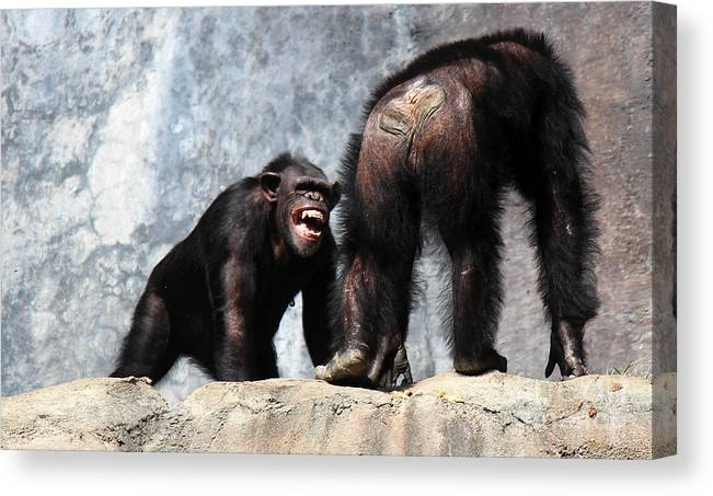 Chimpanzee Canvas Print featuring the photograph The Boss by Cheryl Del Toro