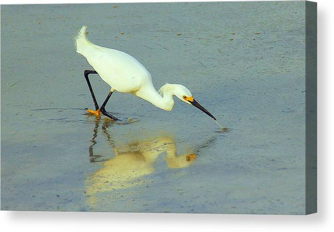 White Egret Canvas Print featuring the photograph Reflection by Monica Lewis