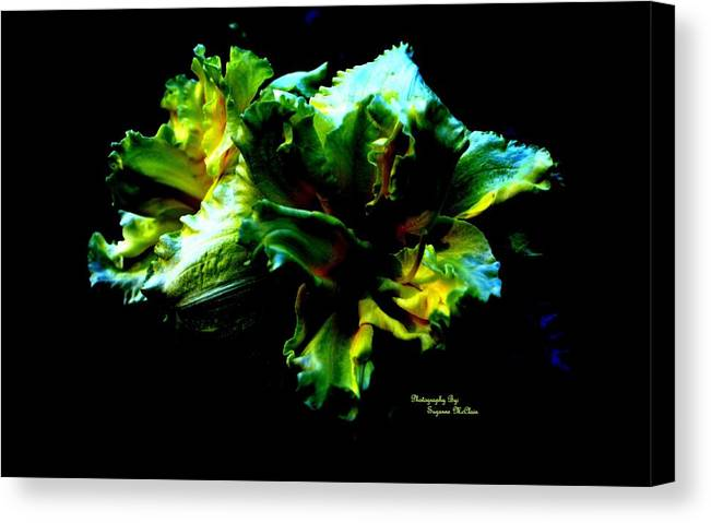 Ruffles Canvas Print featuring the photograph Ruffles by Suzanne McClain