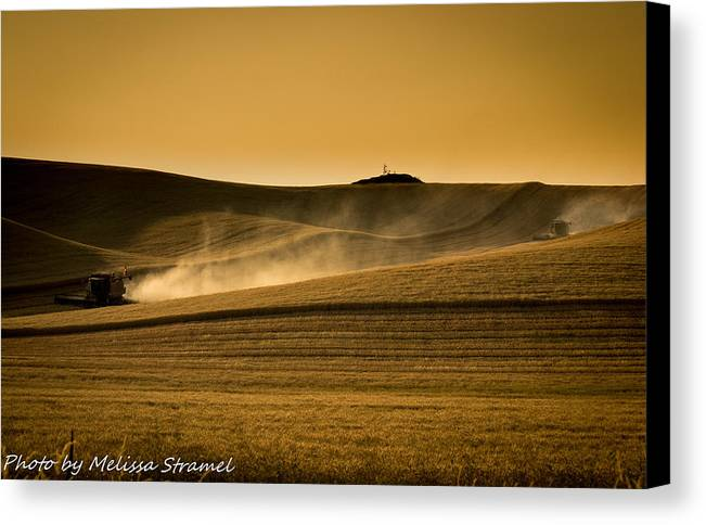 Harvest Canvas Print featuring the photograph Cougar Harvest by Melissa Stramel Hunt