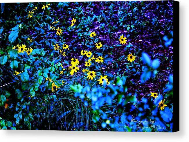 Black Eyed Susans Canvas Print featuring the digital art She Loves Me...she Loves Me Not by Suzanne McClain