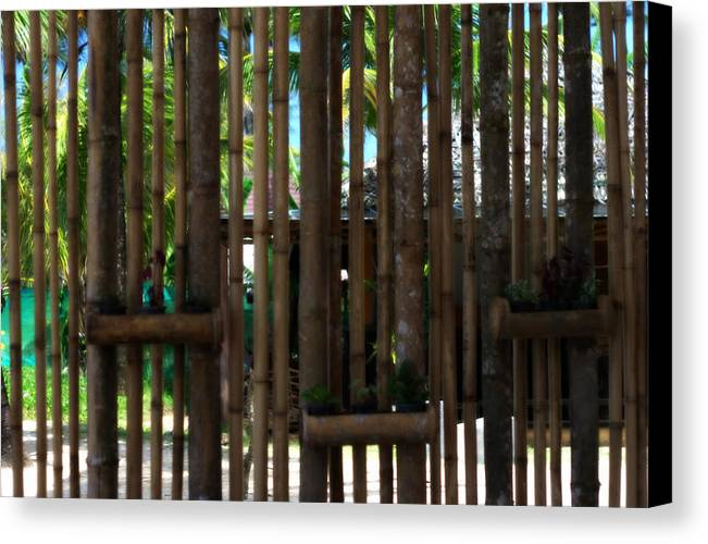 Bamboo Canvas Print featuring the photograph Bamboo View by Georgia Fowler