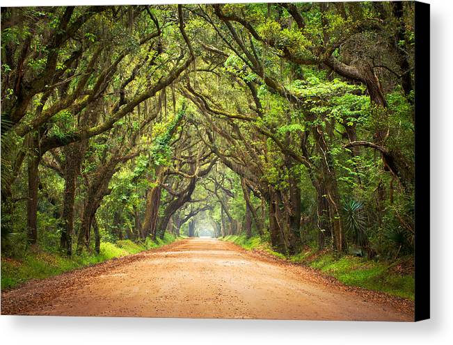 Swamp Canvas Print featuring the photograph Charleston Sc Edisto Island - Botany Bay Road by Dave Allen
