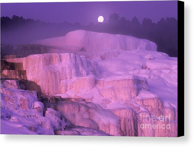 North America Canvas Print featuring the photograph Full Moon Sets Over Minerva Springs On A Winter Morning Yellowstone National Park by Dave Welling