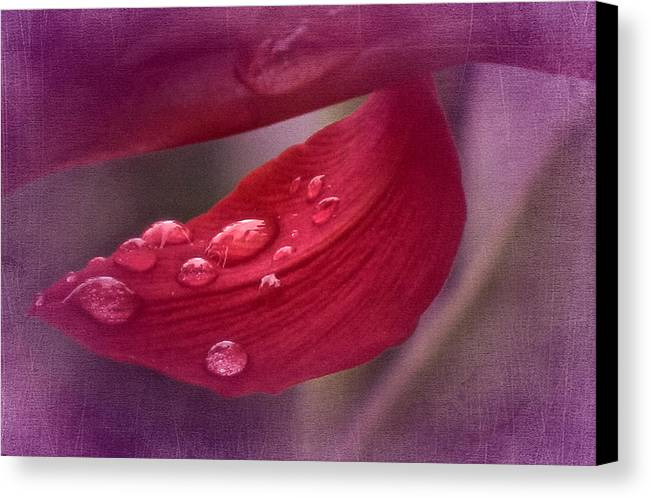 Canna Lily Canvas Print featuring the photograph When The Canna Cries by Richard Cummings