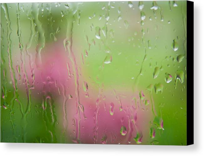 Florals Canvas Print featuring the photograph Rain Soaked Hydrangeas - Yechial Orgel by Yechial Orgel