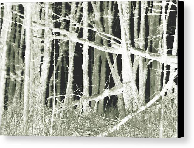 Trees Canvas Print featuring the photograph Winter Trees With Chalk by Mary Anne Williams