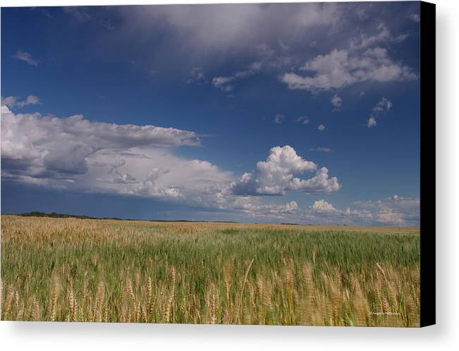 Barley Grain Canvas Print featuring the photograph Barley In The Wind by Angela Patterson