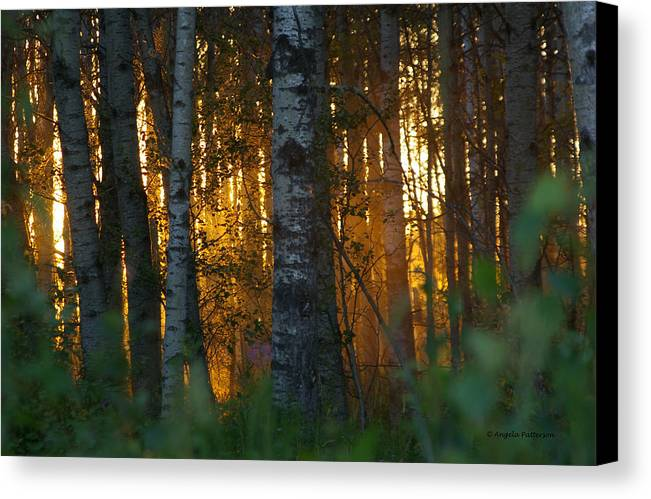 Birch Trees Canvas Print featuring the photograph Beyond The Beaver Pond Horizontal by Angela Patterson
