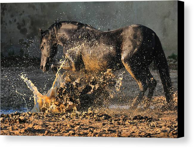 Horses Canvas Print featuring the photograph Boom by Artur Baboev