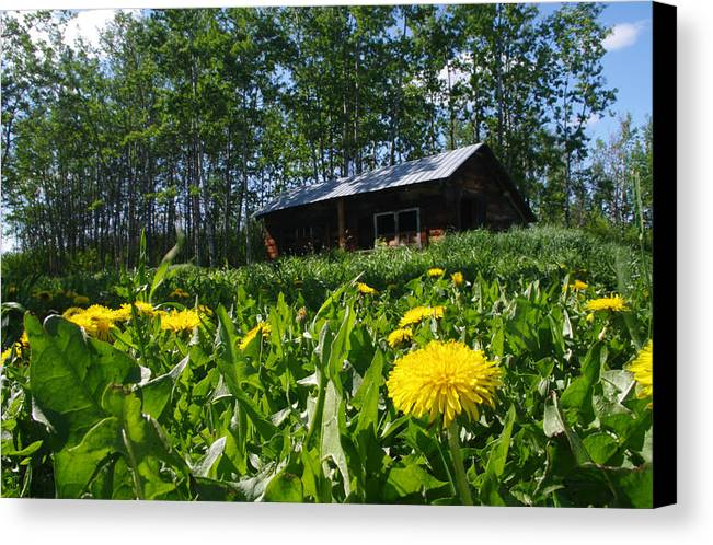 Euphemia Mcnaught Preservation Project Canvas Print featuring the photograph Euphemia Mcnaught Homestead Chicken Coop And Dandelions by Angela Patterson