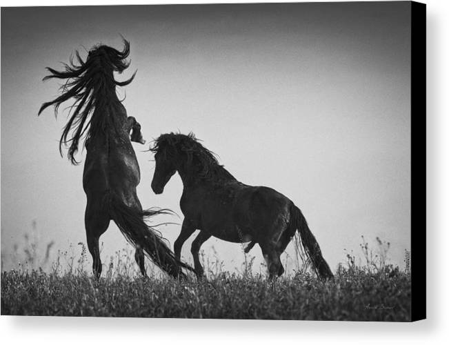 Horses Canvas Print featuring the photograph Fight Of Titans by Artur Baboev