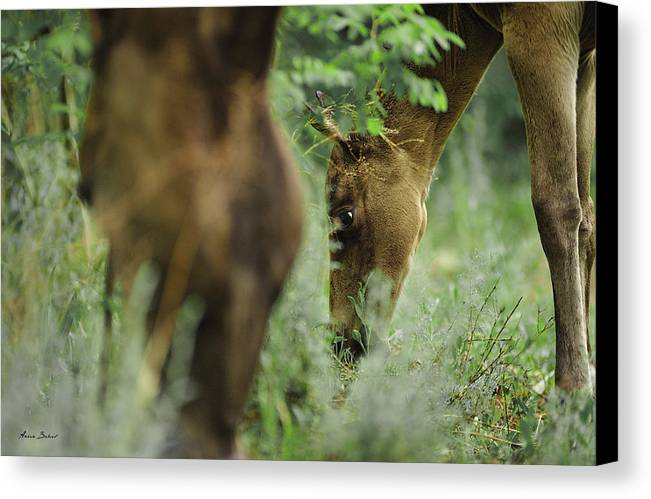 Horses Canvas Print featuring the photograph Foals by Artur Baboev