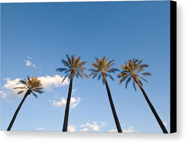 Palm Trees Canvas Print featuring the photograph Four Palm Trees by Rich Iwasaki