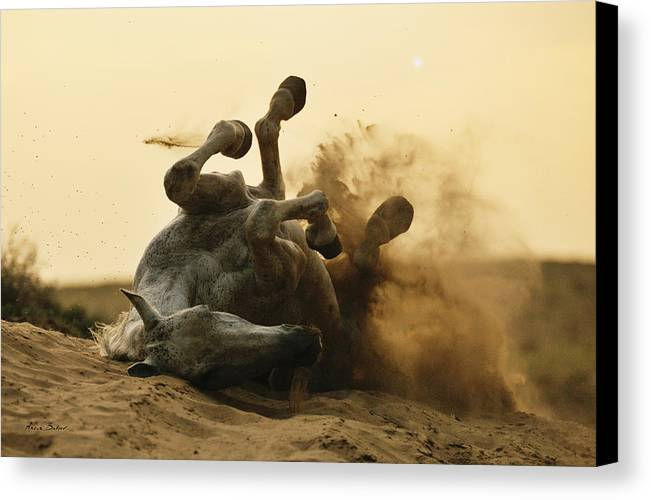 Horses Canvas Print featuring the photograph Horse Game by Artur Baboev