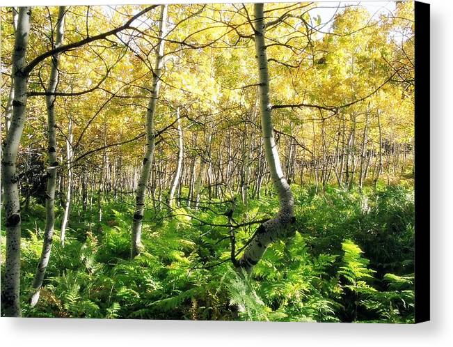 Ferns Canvas Print featuring the photograph Leaves And Ferns by Caroline Clark