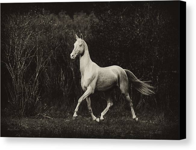 Horses Canvas Print featuring the photograph Shaar-shael by Artur Baboev