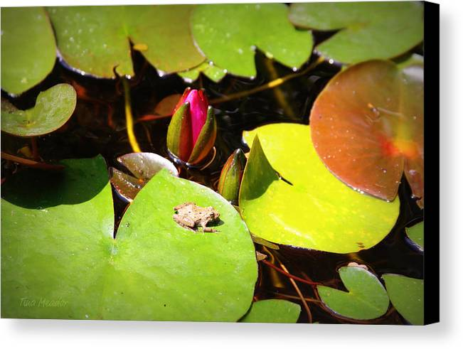 Frog Canvas Print featuring the photograph Tiny Frog by Tina Meador