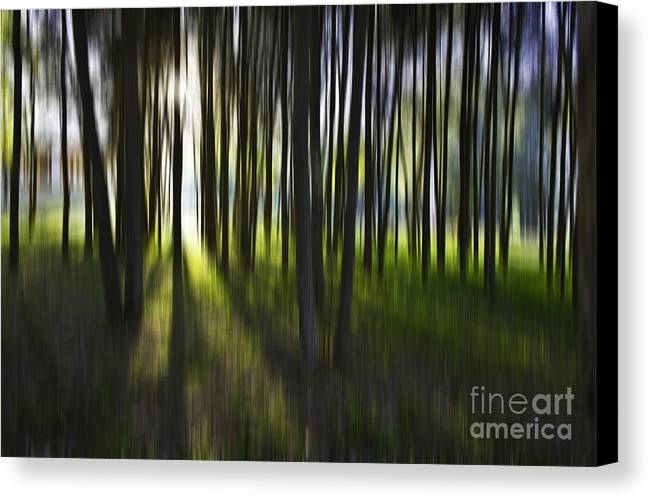 Trees Abstract Tree Lines Forest Wood Canvas Print featuring the photograph Tree Abstract by Avalon Fine Art Photography
