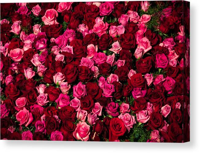 Bed Of Red Roses Canvas Print Canvas Art By Connie Cooper Edwards