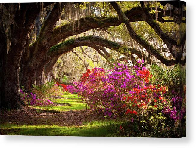 South Canvas Print featuring the photograph Charleston Sc Magnolia Plantation Gardens - Memory Lane by Dave Allen