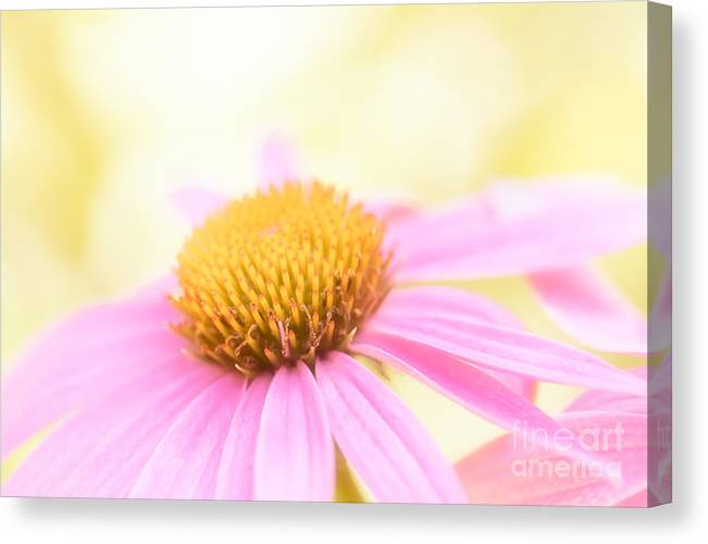 Echinacea Canvas Print featuring the photograph Coneflower No. 1 by Lisa McStamp