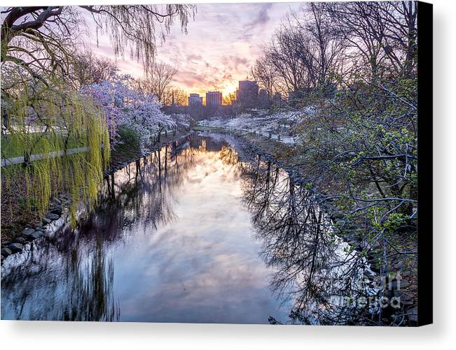 America Canvas Print featuring the photograph Cherry Blossom Lagoon by Susan Cole Kelly