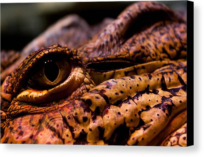 Wildlife Canvas Print featuring the photograph Eye Of The Dragon by Louis Shackleton