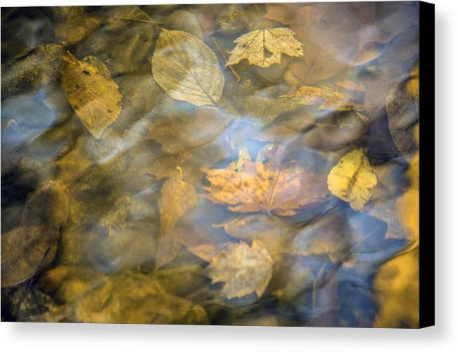 Leaves Canvas Print featuring the photograph Floating by Yvonne Powell
