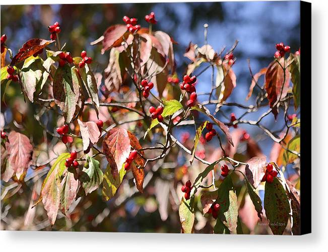 Leaves Canvas Print featuring the photograph Leaves And Berries by Renee Friedel