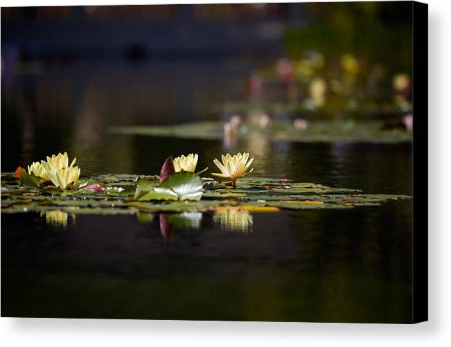 Waterlily Canvas Print featuring the photograph Lily Pond by Peter Tellone