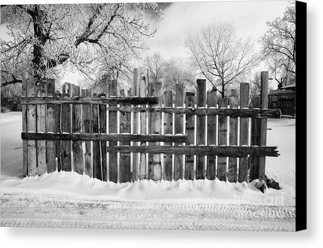 Old Canvas Print featuring the photograph old patched up wooden fence using old bits of wood in snow Forget Saskatchewan by Joe Fox