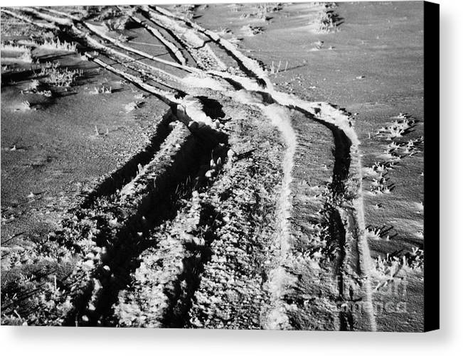 Snowmobile Canvas Print featuring the photograph snowmobile tracks in snow across frozen field Canada by Joe Fox