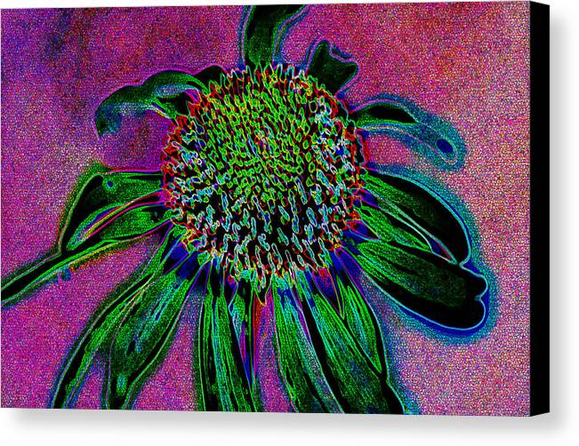 Abstract Canvas Print featuring the photograph Coneflower by Simone Hester