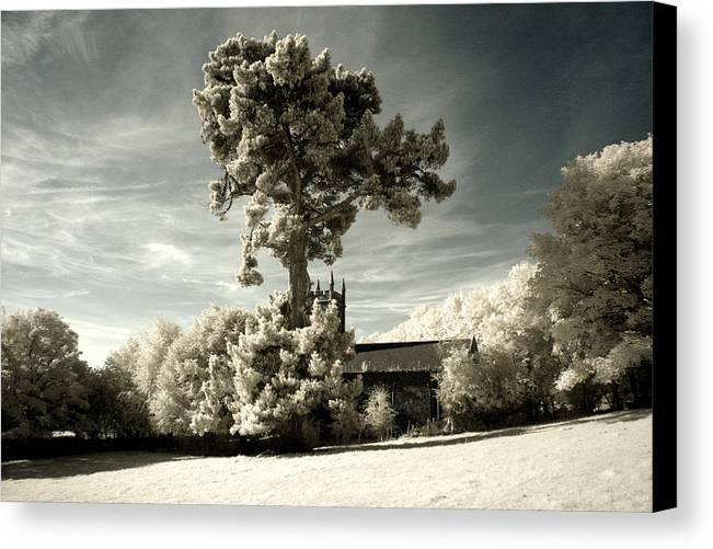 Tree Canvas Print featuring the photograph High Tree by Patrick Galvin
