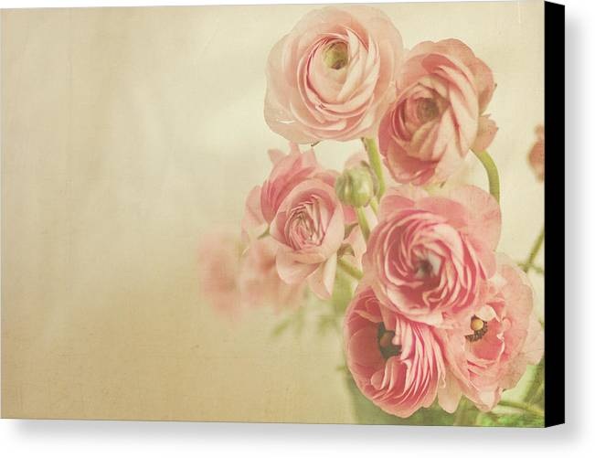 Pink Canvas Print featuring the photograph Look At Us by Angela Stansell