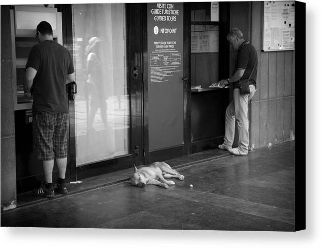Pompeii Canvas Print featuring the photograph Sleeping Dog by Hugh Smith
