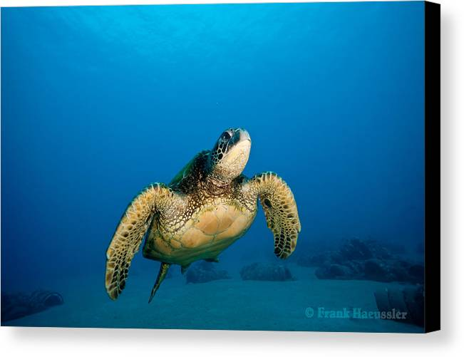 Animal Canvas Print featuring the photograph Sneaky by Frank Haeussler