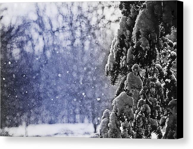 Snowflakes Canvas Print featuring the photograph Snowflakes by Simone Hester