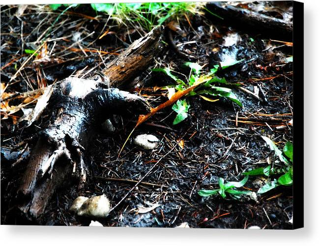 Dirt Canvas Print featuring the photograph Terra Firma by Simone Hester