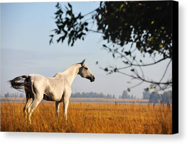 Horses Canvas Print featuring the photograph Alikhan by Artur Baboev