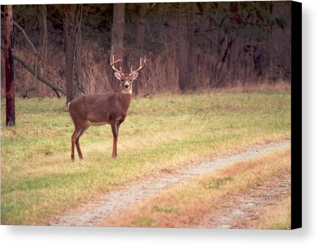 Deer Canvas Print featuring the photograph 070506-17 by Mike Davis