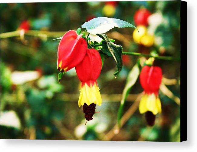Flowering Plant Canvas Print featuring the photograph Flowering Plant by Michael C Crane