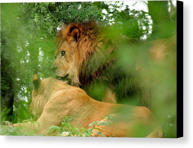 Lion Canvas Print featuring the photograph On Watch by ShadowWalker RavenEyes Dibler