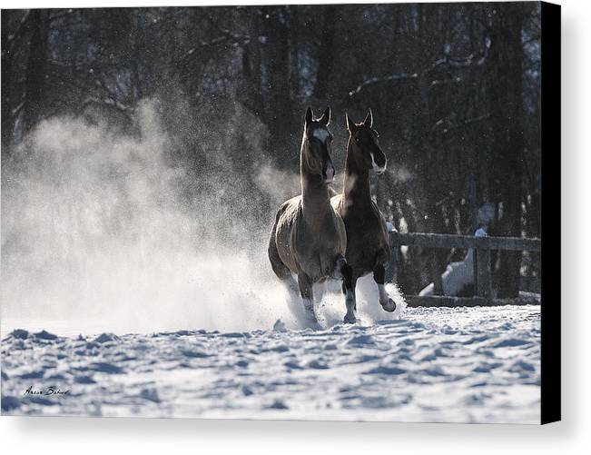 Horses Canvas Print featuring the photograph Ulukbek by Artur Baboev